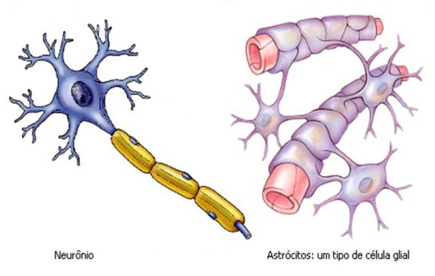 Neurônios+e+Células+da+Neuróglia