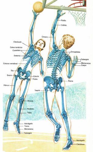 esqueleto-humano