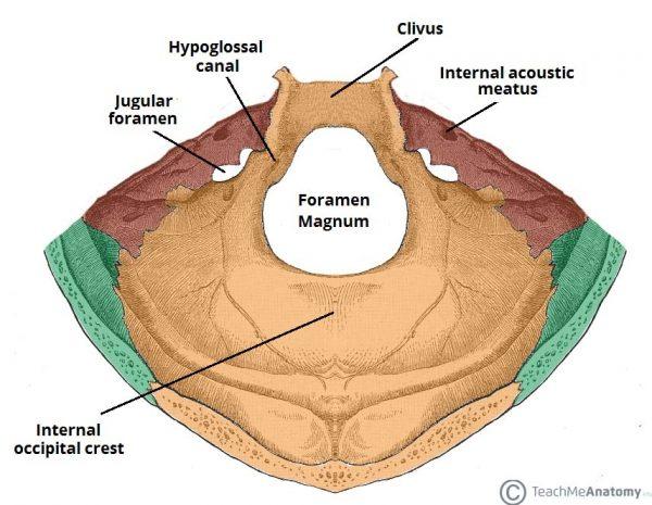 fossa posterior