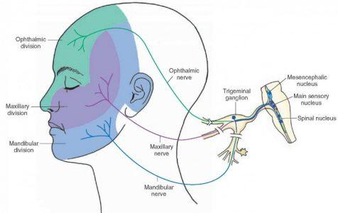 nervo trigemeo 2